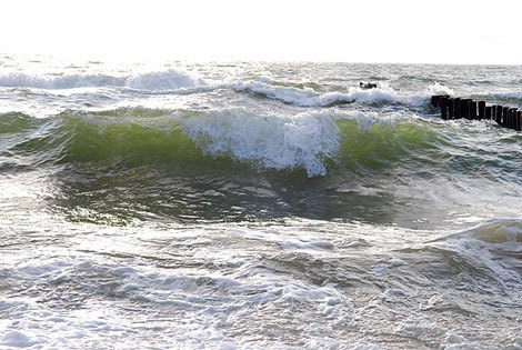 7. Tokios bangos (Nuotr. Hermis PreikЕЎtas)